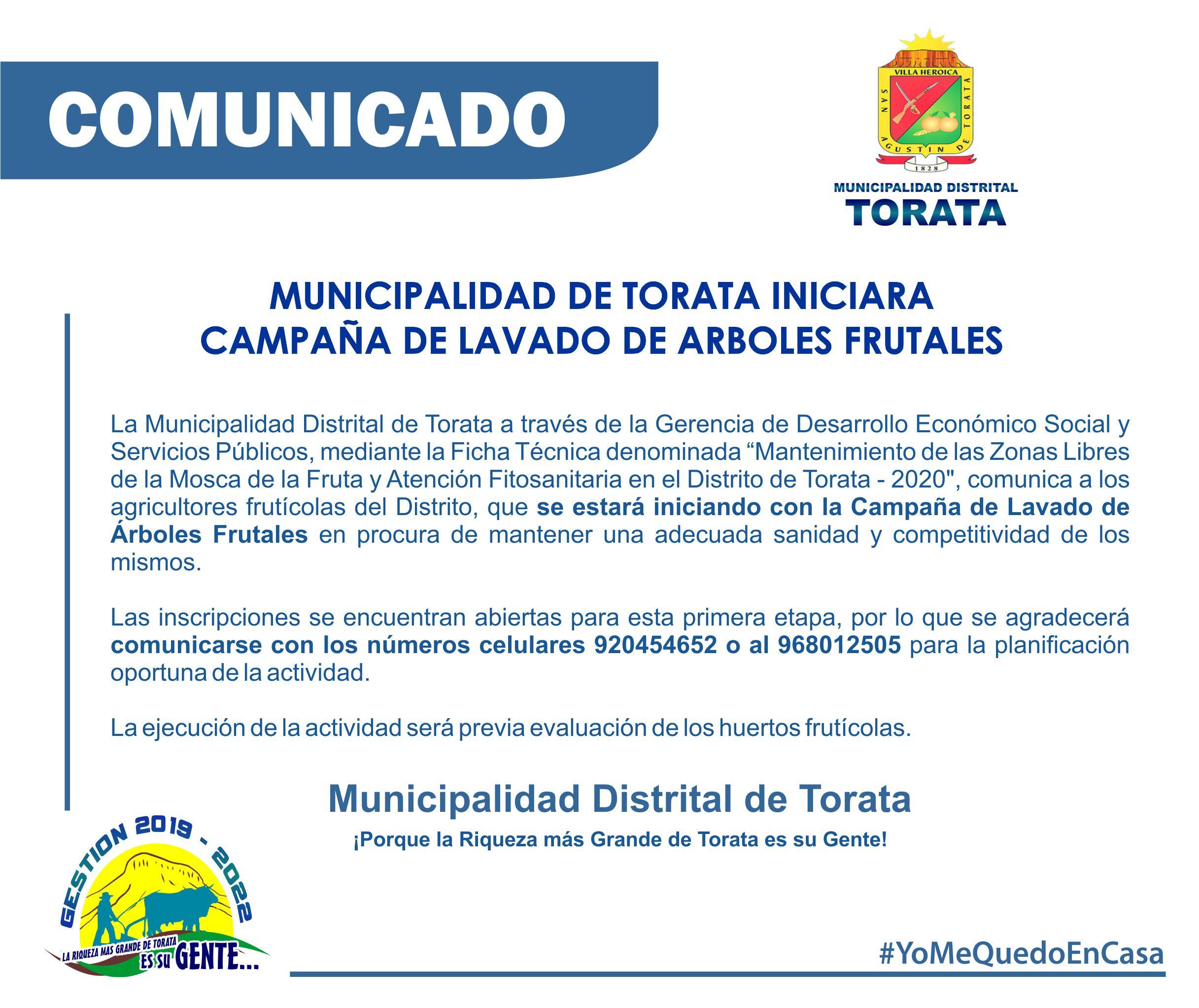 MUNICIPALIDAD DE TORATA INICIARA CAMPAÑA DE LAVADO DE ARBOLES FRUTALES